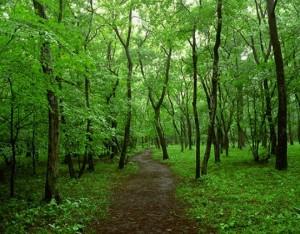 玄海遊歩道として使う雑木林の写真